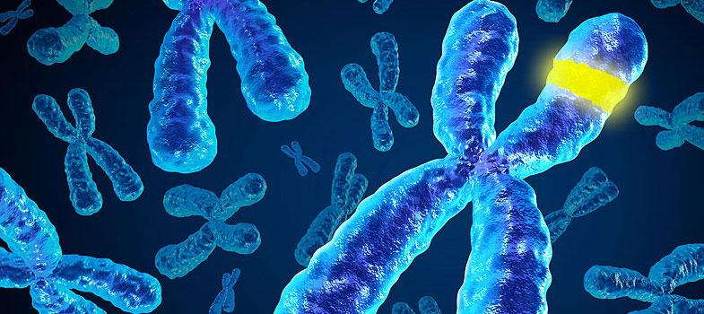 Jaipur doc exploring if 'stars' get transferred like genes